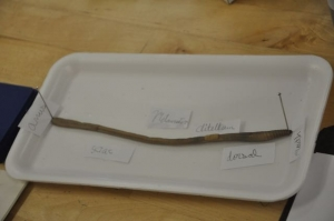 We began labeling the external parts of the earthworm.