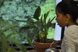 . . .caring for the classroom plants. . .