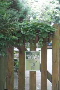 Wildlife behind this gate settle in for a summer truly unpreturbed by the educational process.