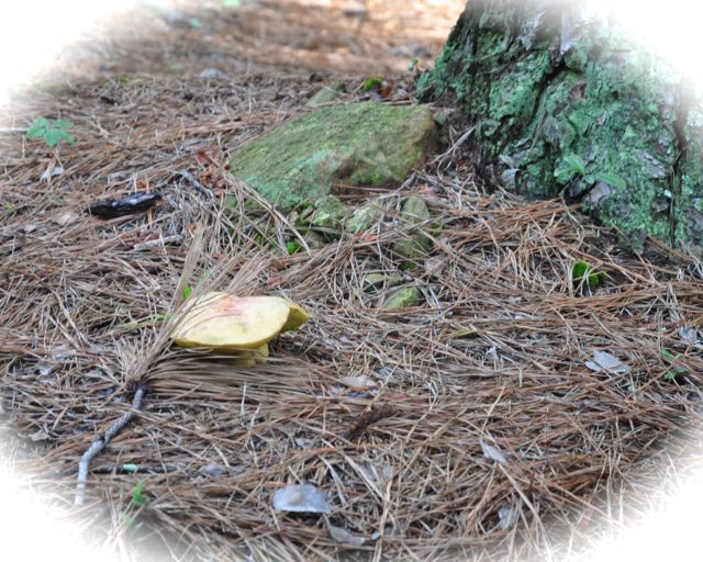 Once we started looking for them, we could find mushrooms, especially at the base of old trees.