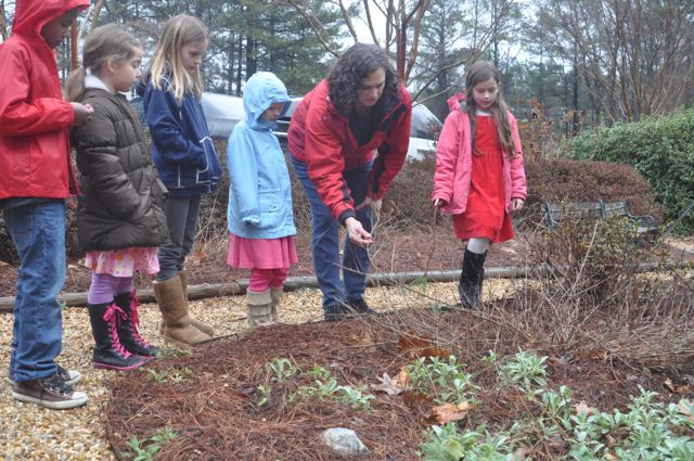 An outdoor group lesson introduces additional information about stems and leaves to a group of Elementary children.  Some plant structures are especially  interesting in the fall.